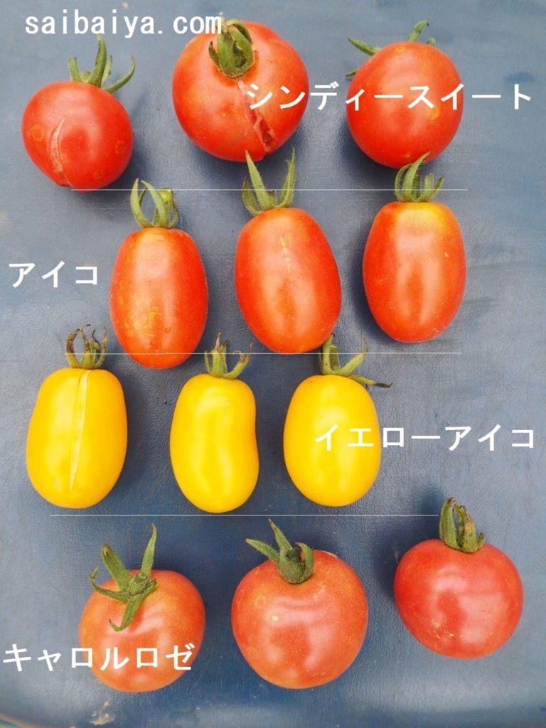 ミニトマト 裂果