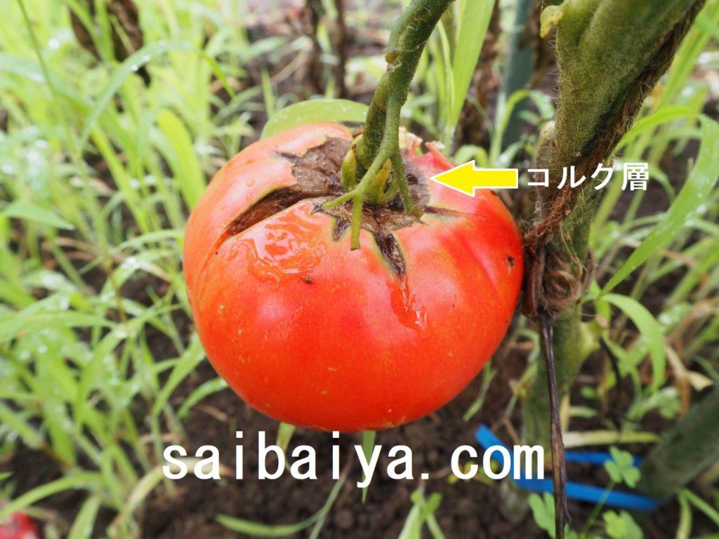 トマト 裂果
